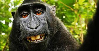 monkey-selfie