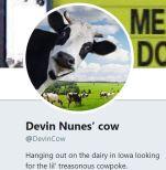Devin Nunes' Cow Twitter Account